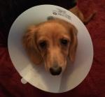 Carter post-surgery