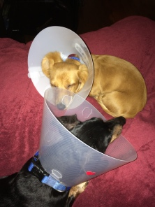 Charlie and Carter while both recovering from eyelid surgery